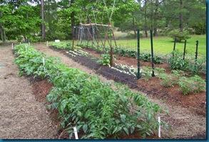 Garden 1 wide rows