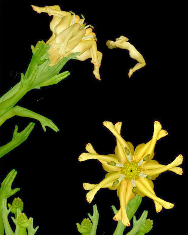 cecelia webber 8