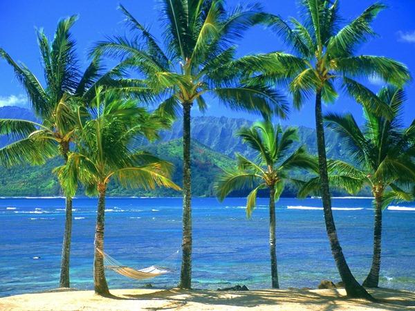 صور هاواي5