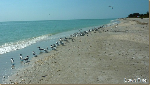 Beach walks sanibel_101
