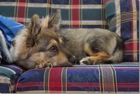 strange-dog-cross-breeds-007