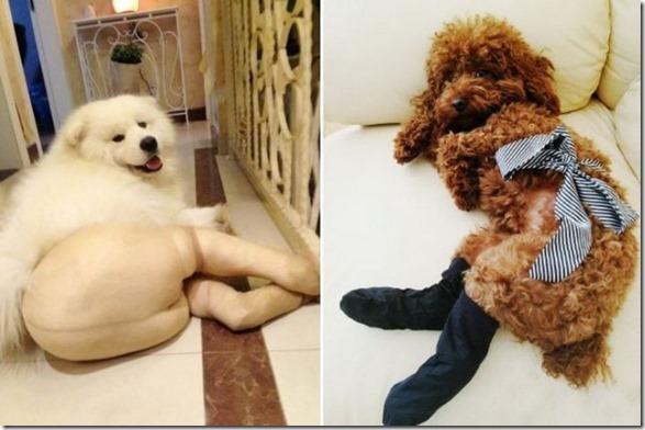 dogs-pantyhose-10