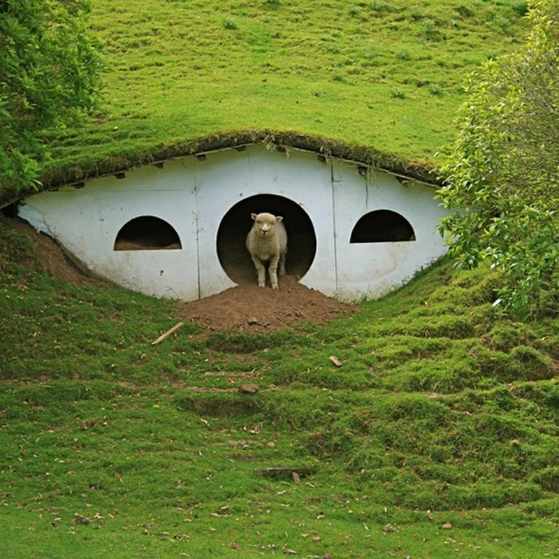 Lord of Rings Movie Set Now Houses Sheep