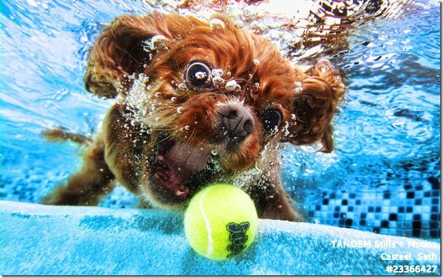 dogs_under_water-0004