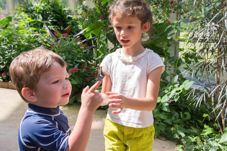 Callaway Gardens butterfly garden blog-27