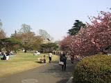 Shinjuku Gyoen National Park in April 2007