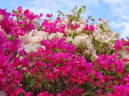 Flori Mauritius