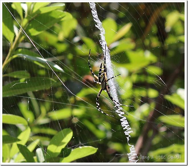 spider_edited-1