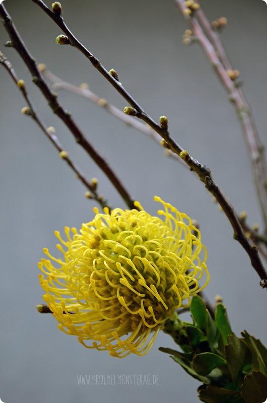 FF (04) gelbe Protea, gefüllte Tulpen, Kirschzweige und rosa Gänseblümchen