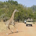 Im zentralen Teil des Nationalparks begegnen wir wieder häufiger anderen Fahrzeuge. © Foto: Marco Penzel | Outback Africa Erlebnisreisen