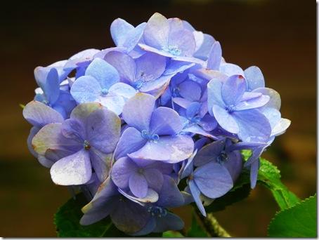 imagini-de-flori