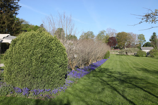 Just look at this vibrant muscari border near the pergola.