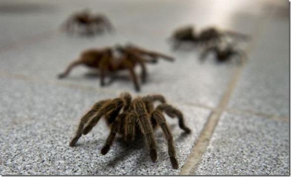 spider-farmer-juan-1