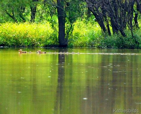 4. Rio Rico pond-kab
