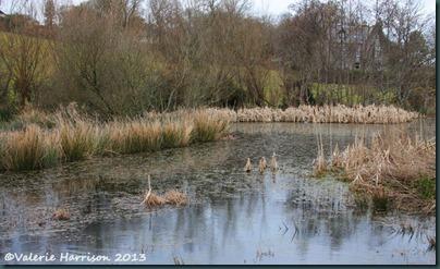 29-wetland