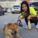 Pet Express Doggie Run 2012 Philippines. Jpg (263).JPG