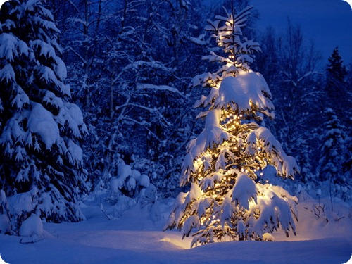 Winter-wallpapers-winter-2768524-1024-768