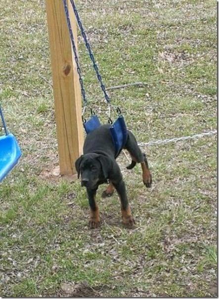 dogs-best-friend-013