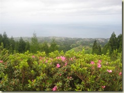 Azaleas and the pacific (Small)