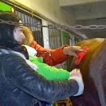Катання та спілкування з кіньми » Катання та спілкування з кіньми - 8.12.2013