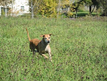 20140927_113026-property-dogs