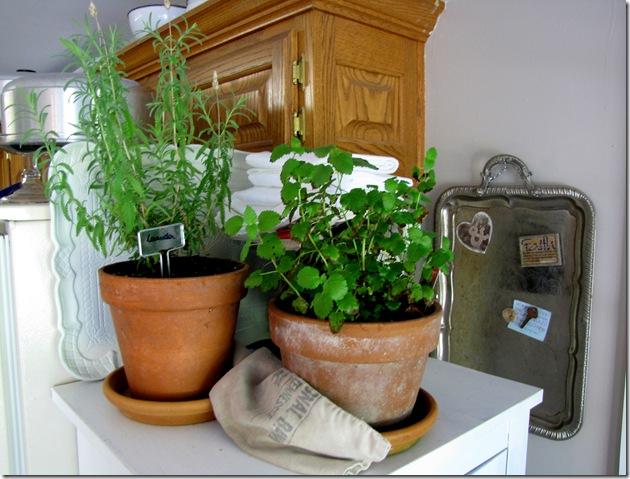 herb pots 3