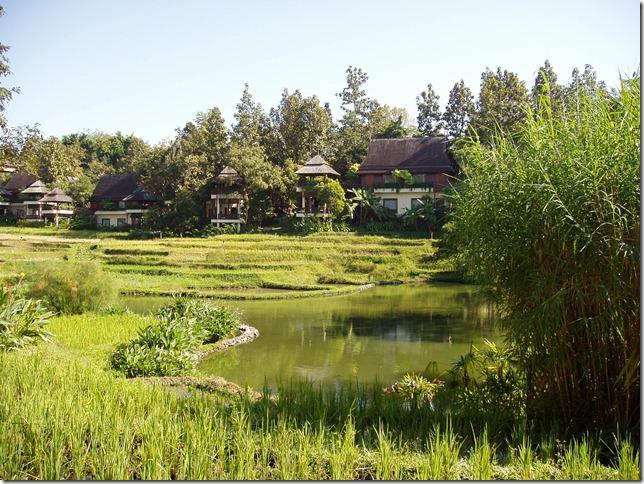 稻田景觀一角1