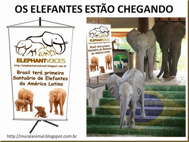 OS ELEFANTES ESTÃO CHEGANDO