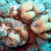 koral_31.jpg