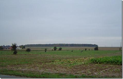 Le bois de Longueval vu depuis le monument o sont inhums les cousins Duflanc  Ginchy