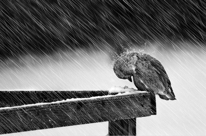 duro_invierno