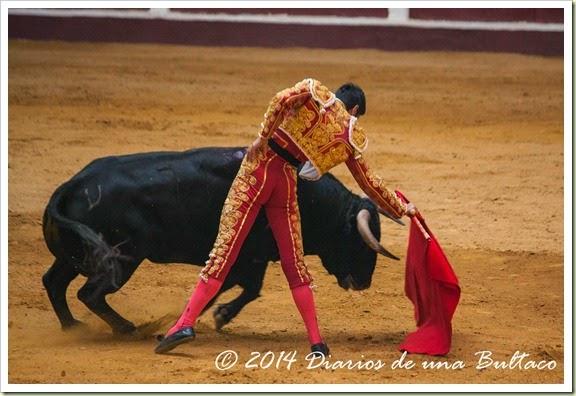 Toros 2014 (1)-49