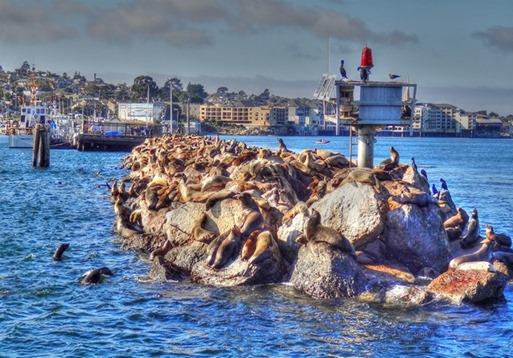 __Monterey3_3