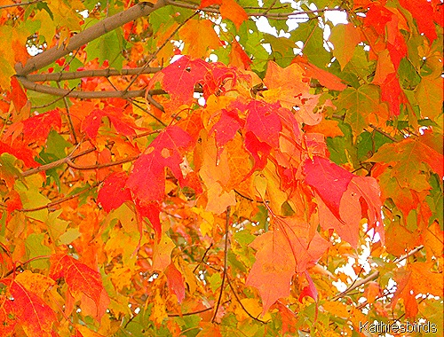 12. leaves-kab