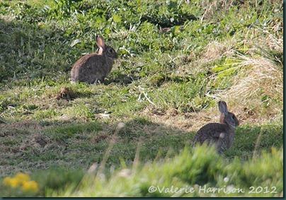 47-rabbits