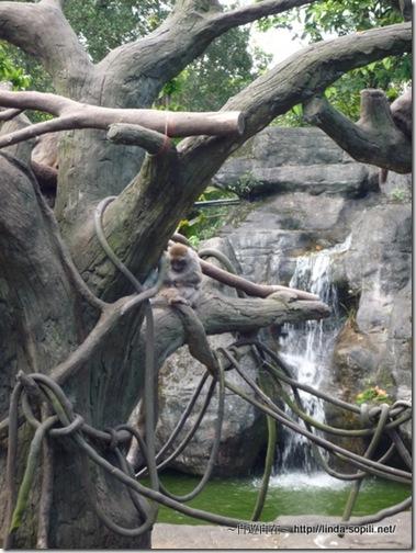 木柵動物園-1