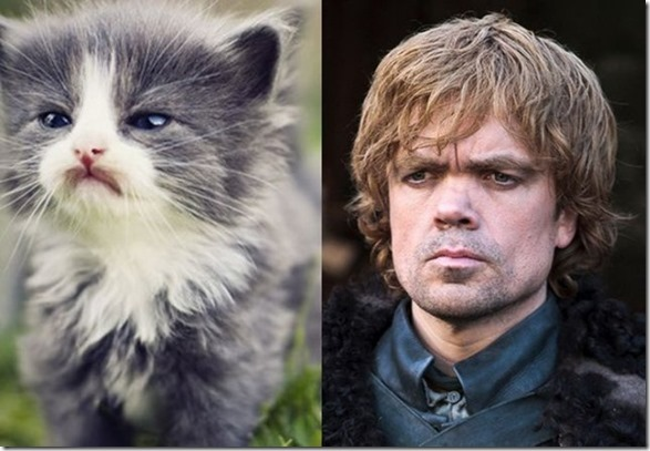 cats-game-thrones-15