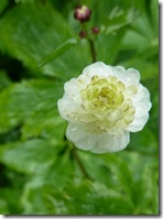 stobshiel flower3