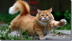 cat-cats-kitten-step-apart-tips-for-photographing-your-cat-photos-pictures(blue-palm.blogspot.com)