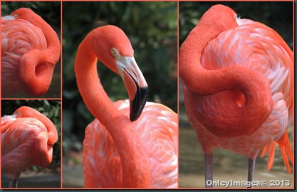 flamingo collage2