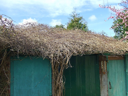 The clematis roof in winter