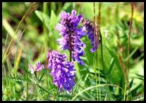 03g1 - Knight Trail - flowers