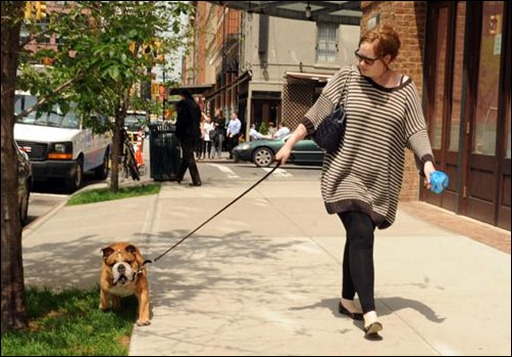 British soul singer Adele walks her English bull dog on a sunny day on the streets of Tribeca, N.Y.