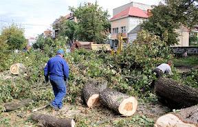 В Ужгороде на Швабской срежут все деревья 6.jpg