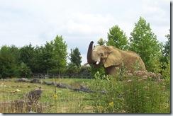 2011.07.26-043 éléphants