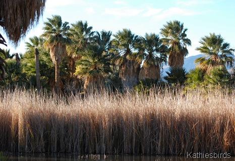 4. reeds n palms-kab