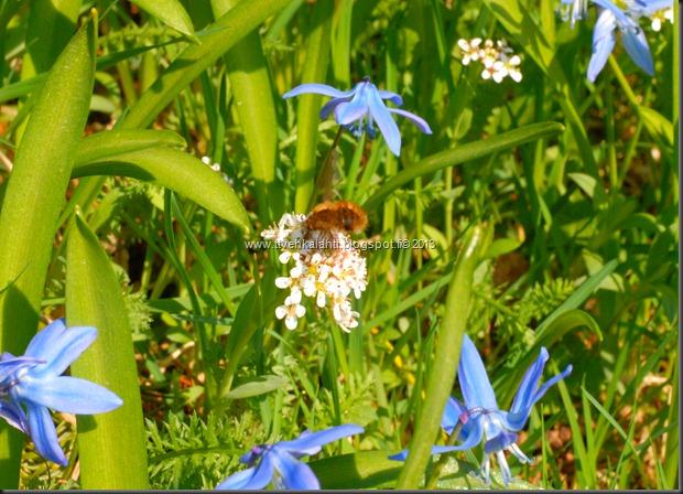 makro kukkia 099