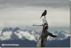 Pássaro Circuito W