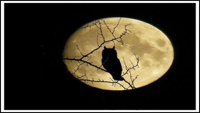 Búho en la oscuridad