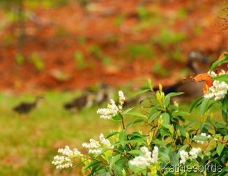 11. duck family DSC_0024